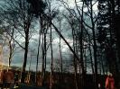 Droht zu Fallen Baum B3