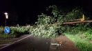 Bäume auf Straße nach Unwetter